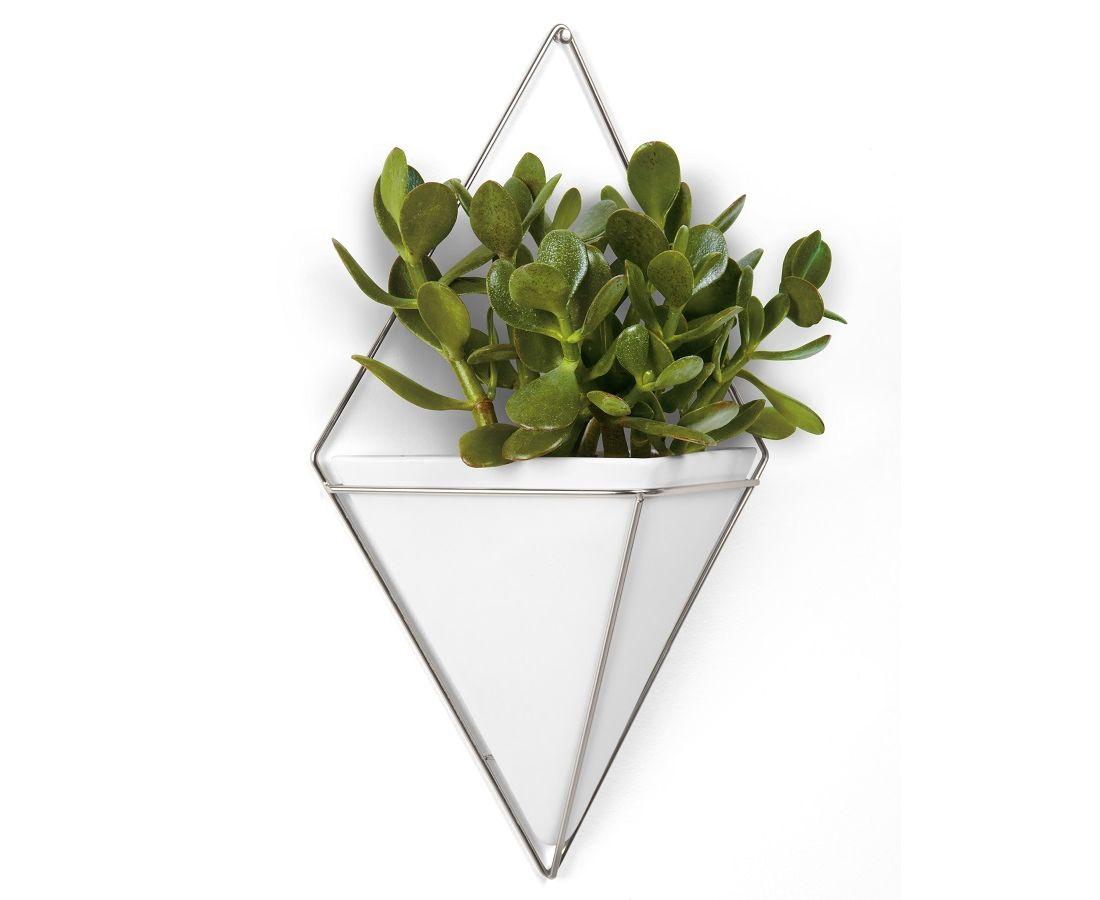 все благодаря настенные растение фото катке функционирует ультрасовременная